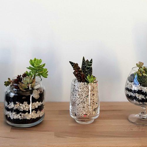 lunaterrana-terrarium-atelier-DIY-5